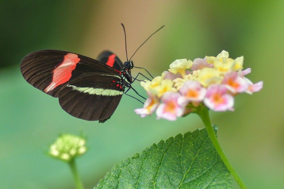 croissance d'un papillon